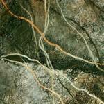 Tropismos VII